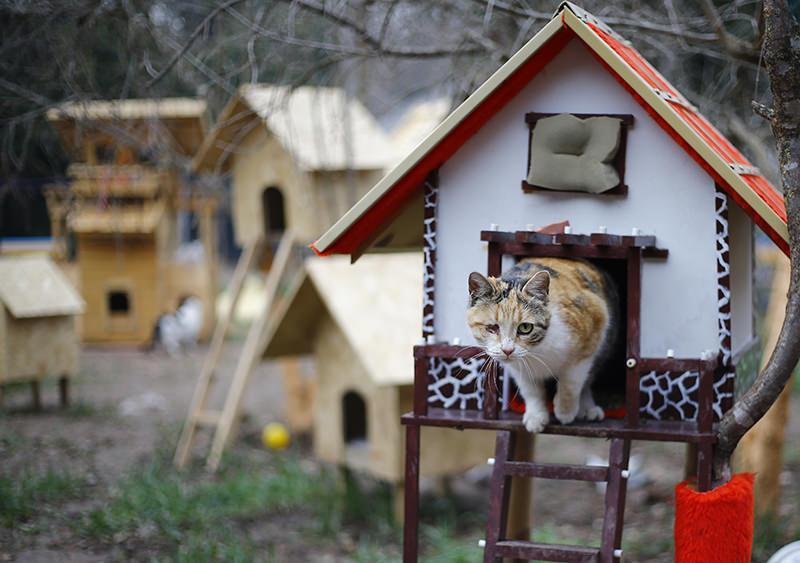 В Турции построят деревню для кошек
