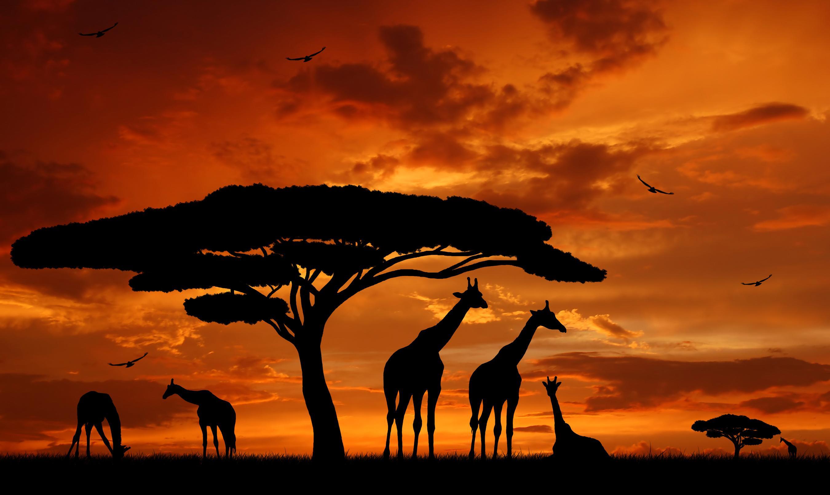 Африка - Дикая природа