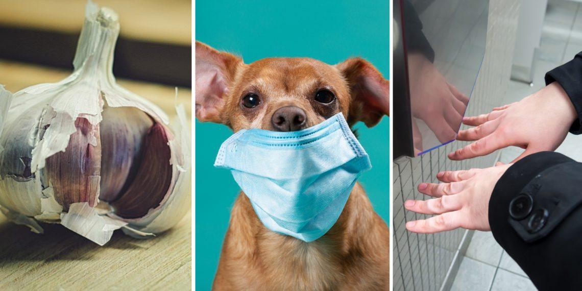 ВОЗ развеяла мифы и слухи о новом коронавирусе