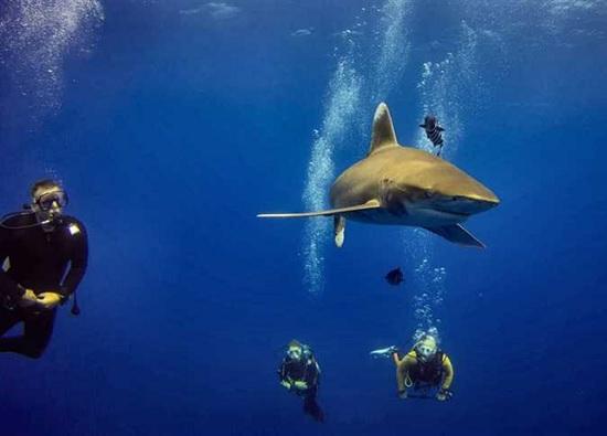 Акулы снова в Египте и Италии. Специалист рассказал о закрытии пляжного сезона 2020