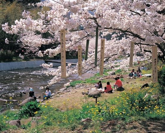 Япония предлагает в Facebook — экскурсии по стране восходящего солнца
