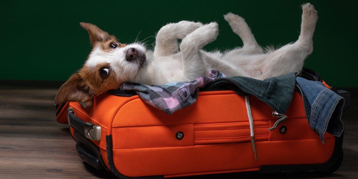 S7 разрешила провозить животных в салоне самолёта