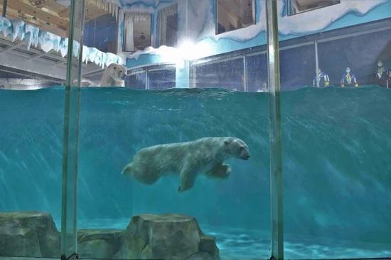 В китайском отеле можно жить рядом с полярными медведями