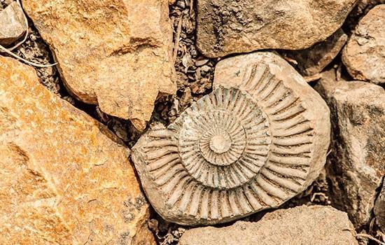 Лучшие палеонтологические туристические места в мире