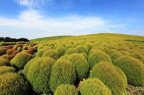 Национальный парк Хатачи — удивительное место в Японии